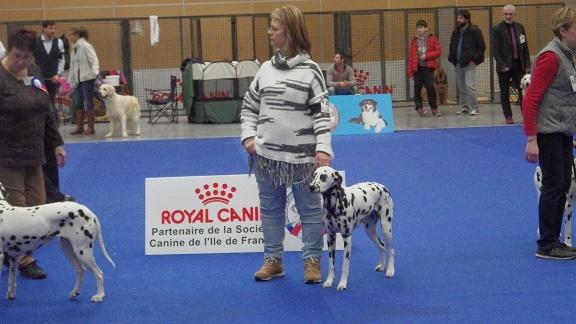 le Bourget 2019 (cacib)